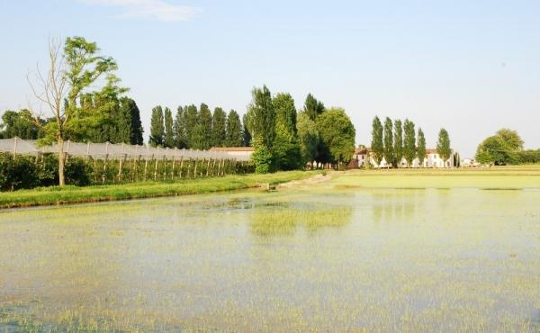 Ecomuseo delle risaie, dei fiumi e del paesaggio rurale